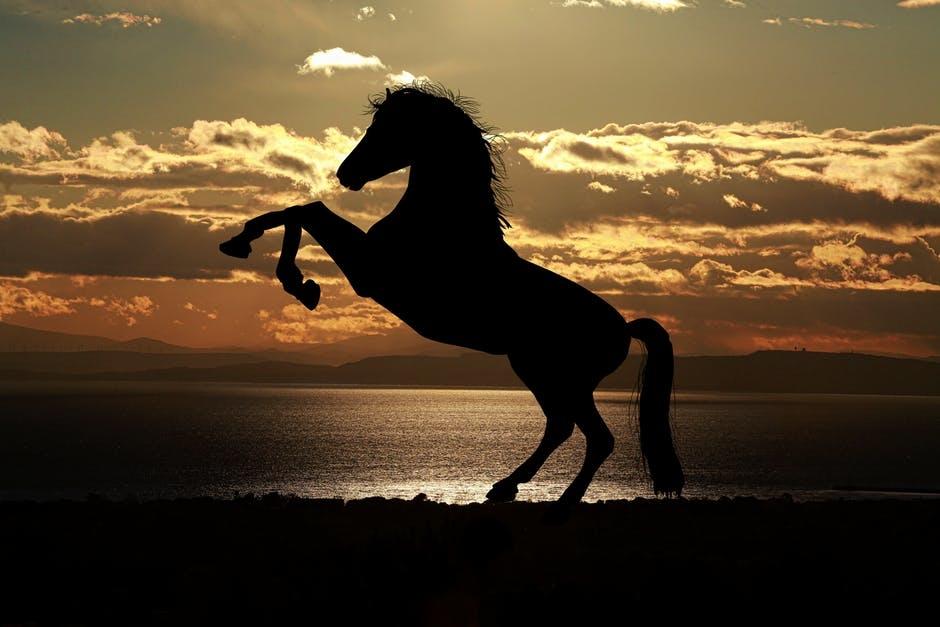 leg og aktivering af hest