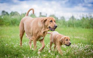 Broholmeren - fortidsminder i nutidens hund