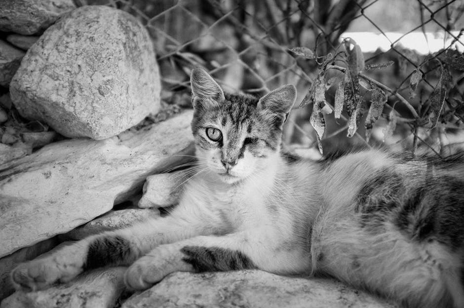 efterladte katte