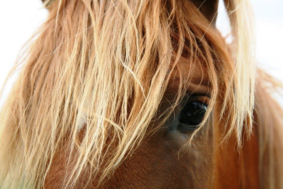 hestens instinkter