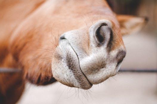 hestens sanser