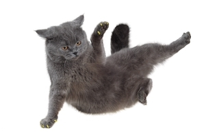 En kat lander altid på benene