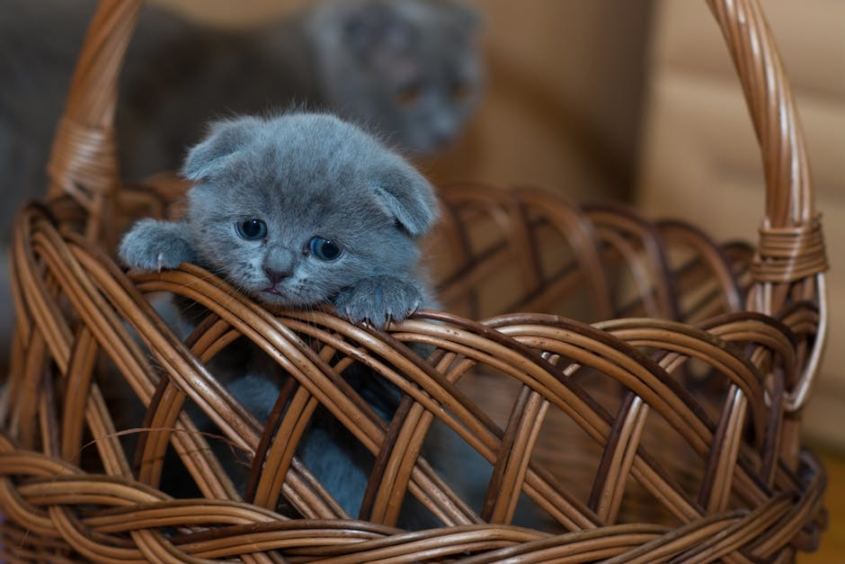kat med ud at rejse