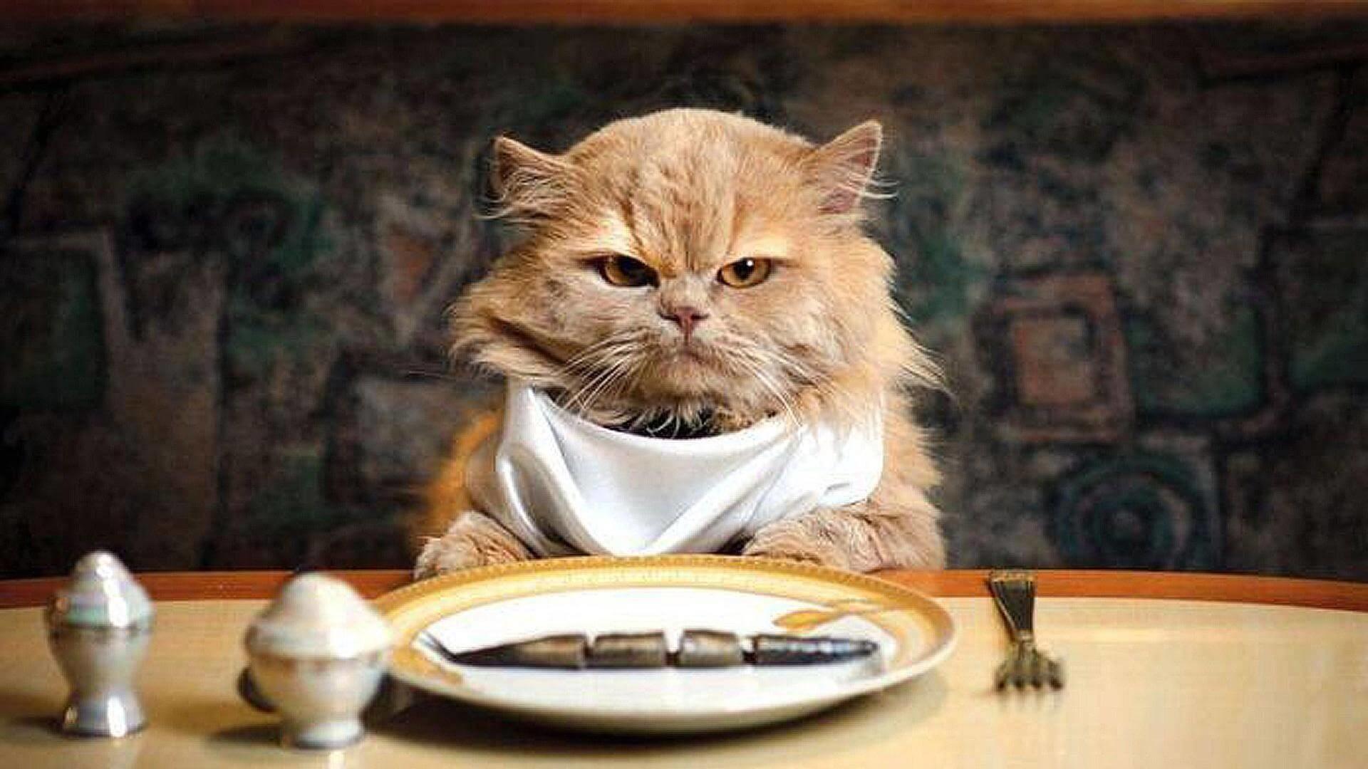katte kan ikke tåle