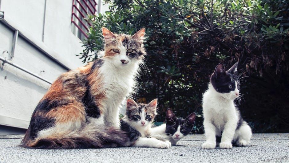 viden om katte