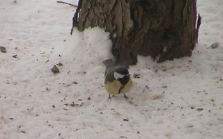 Vinterfodring af havens fugle