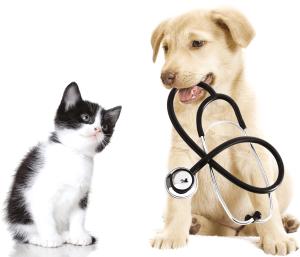 Find dyrlæge og dyrehospital