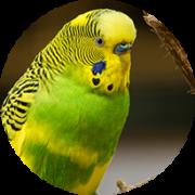 fuglefoder