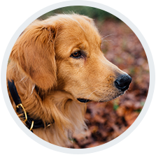 8c06992bcd1 Er det billigere at købe hundemad online? Hvor finder jeg hundefoder på  tilbud? Hvor meget eller hvor lidt hundeefoder? Få svar på alle dine  spørgsmål ...