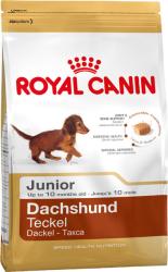 Gravhund junior