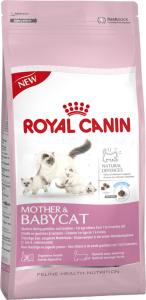 Kitten 1-4 mdr Babycat