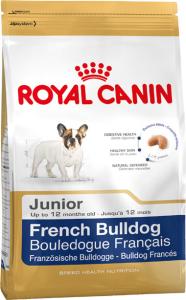 Fransk Bulldog junior